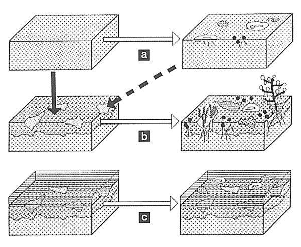 Meccanismi generali dei processi di biodeterioramento. Principi generali. Nardini Editore